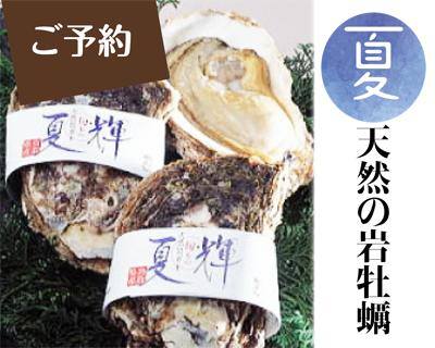 [7/8まで] 夏牡蠣【旬は7月と8月】日本海の天然の岩牡蠣