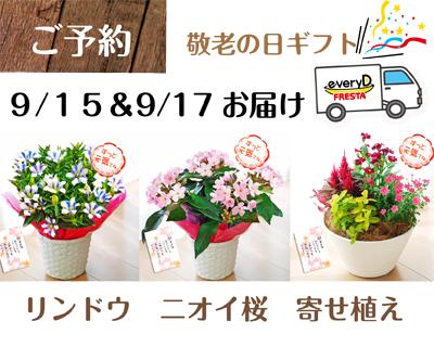 【本日締切】敬老の日ギフト:ゆったり楽しめる花鉢&寄せ植え