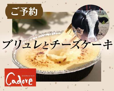 新鮮なミルクで作るブリュレとチーズケーキ