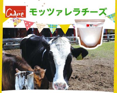 カドーレの牛さんの写真を撮ってきました